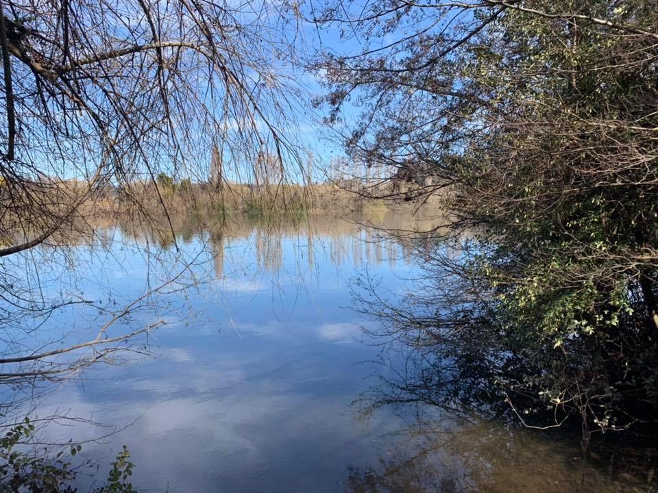 Vendo 33.5ha con orilla del Rio Bueno